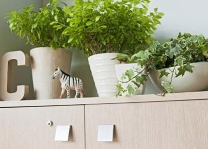 Plants in pots above kitchen cabinets