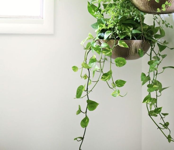 10 Plants That Survive Low Sunlight In Bathroom