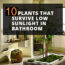 10 Plants That Survive Low Sunlight In Bathrooms